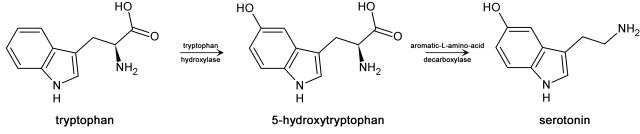 Trp-5ht-pathway